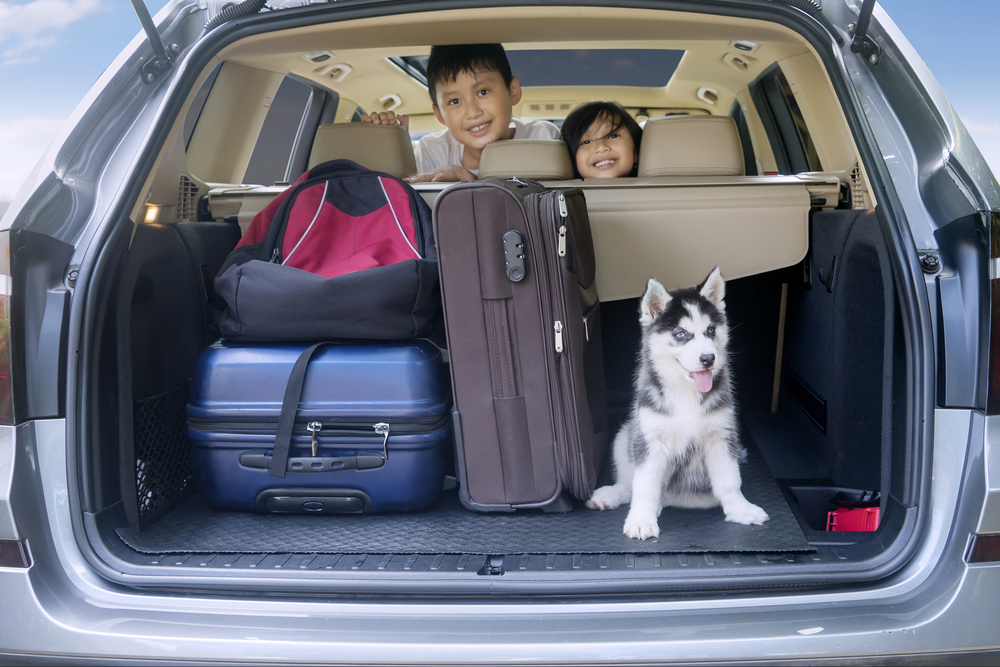 Children and dogs in car